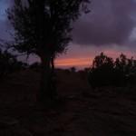 Sun_Set_Trees