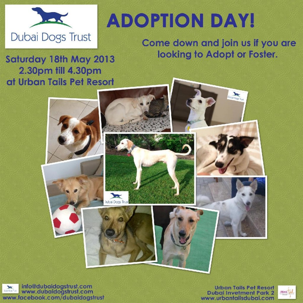 ADOPTION day poster may 2013(1)-page-001