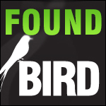 Found-bird-Dubai