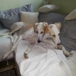Jessy-and-Rudi