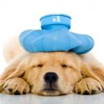 pet-secure-insurance