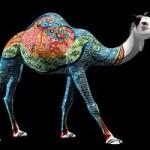 camel-caravan-dubai