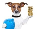17986277-dog-holding-a-blue-piggy-bank-and-a-stack-of-coins