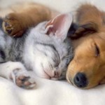 dog-and-cat-cuddle-150x150